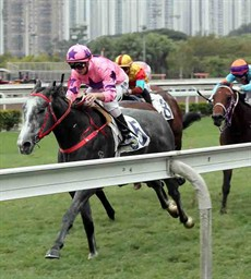 Hot King Prawn remains unbeaten from five starts in the Class 2 Chek Keng Handicap (1000m), with Zac Purton once again in the saddle.
