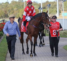 Hold The Line prepares to go into race action for the second time at the Sunshine Coast on August 25