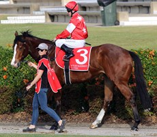 Pinnacle Star ready for action in the pre-race parade at the Sunshine Coast on August 28