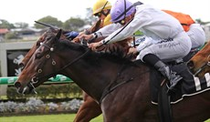 Frangipani Moon winning at Doomben on August 14 (above and below)